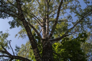 lookup_tree0108p